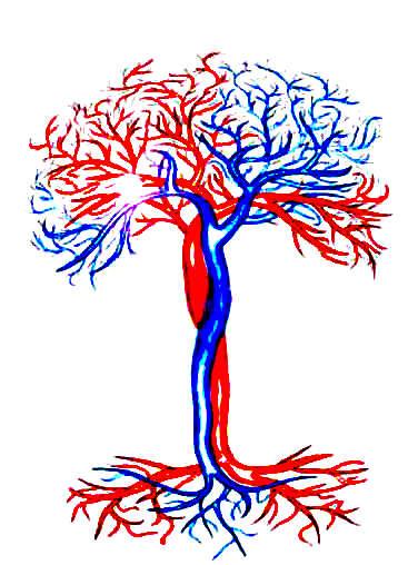 vaskularnahirurgija.me